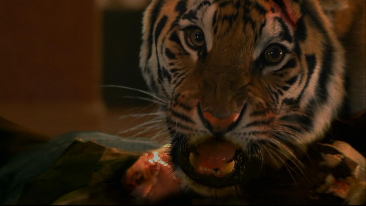 Tiger,Burning Bright